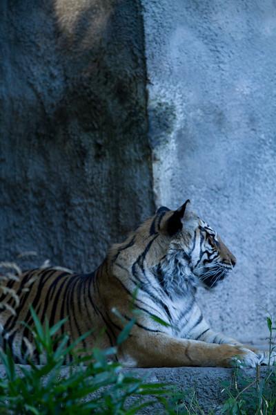 ZooClass-64.jpg