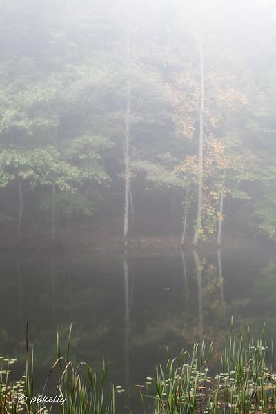 pipestem fog 100718-3.jpg