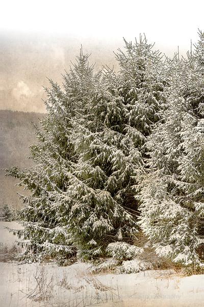 April Snow Storm, Enfield.jpg