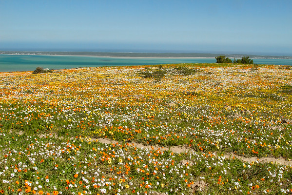 West Coast National Park -South Africa