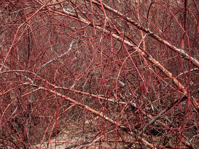 Calf_Creek_201004-35.jpg