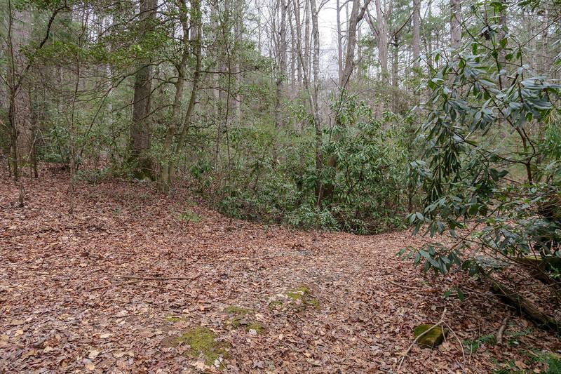 Bear Branch Trail -- 2,590'