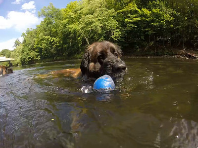 GoPro Swim Videos