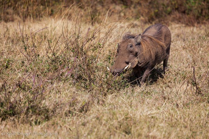 Ngorongoro-6.jpg