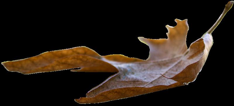 Leaf 25.png