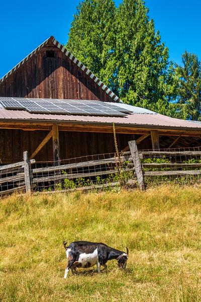 Leaping Lamb Farm-5508.jpg