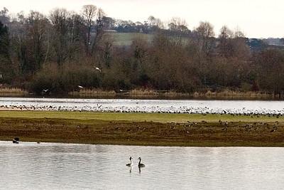 Birds on fresh water UK