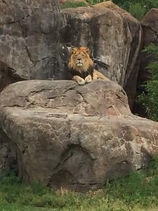 2016 Sedgwick County Zoo