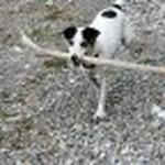 farley pups 035-2.jpg