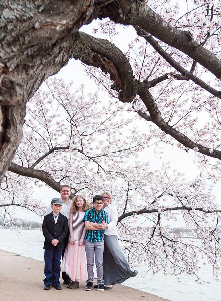 CherryBlossom-4.jpg