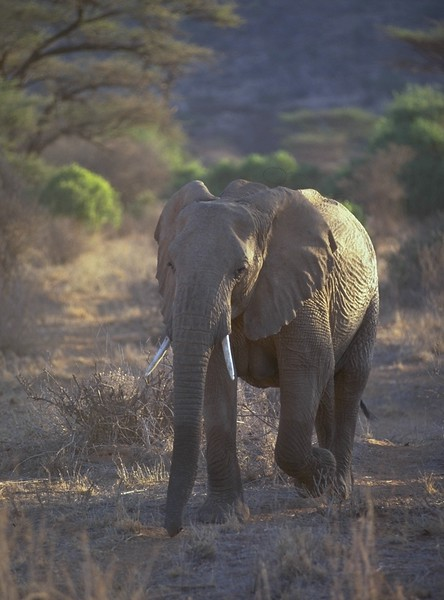 00951 Elephant.jpg