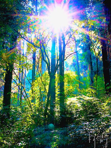 芬多精沐浴--森林漫步!