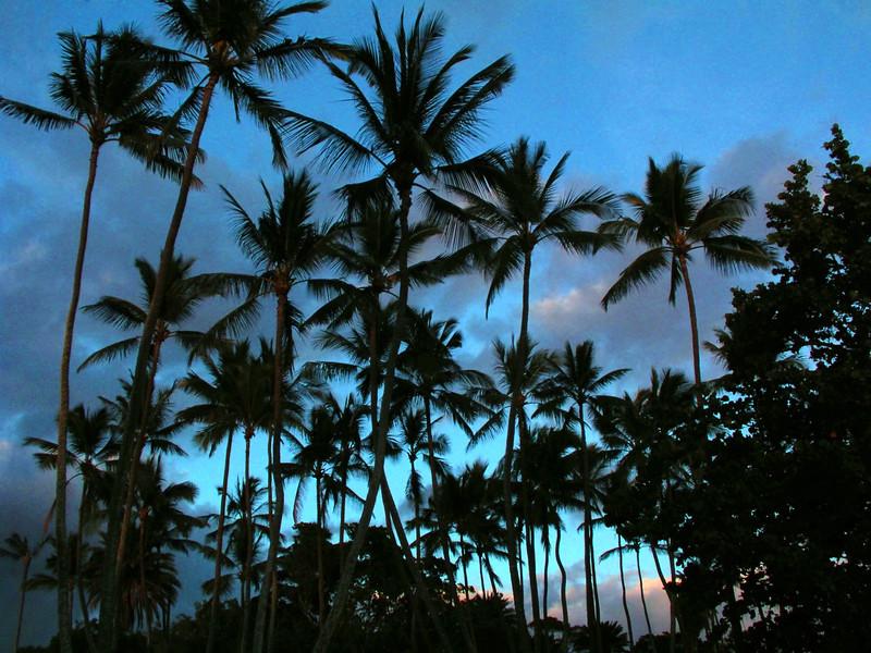 Silhouettes of a Coconut Palm Trees at Sunset  Hale'iwa Beach Park   North Shore of O'ahu, Hawai'i