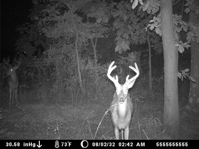 2012 Deer Trail Cam Pictures
