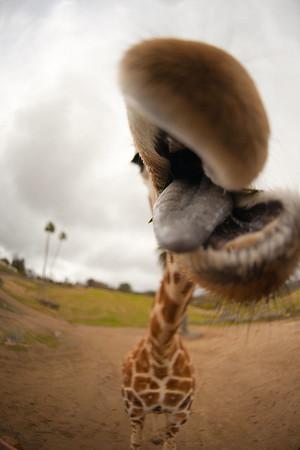 San Diego Wildlife Animal Park