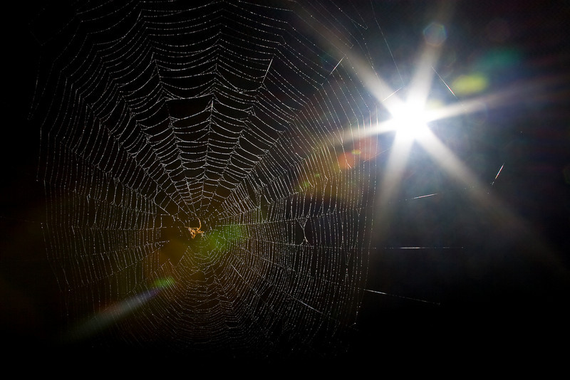 Spiderman-97.jpg