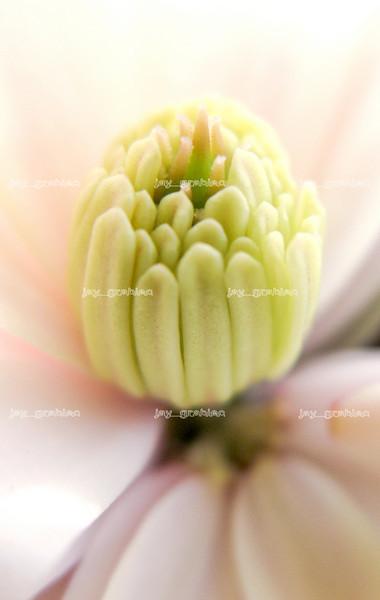 20100329_Flowers03.jpg