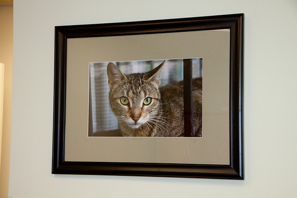 Framed Photo Art