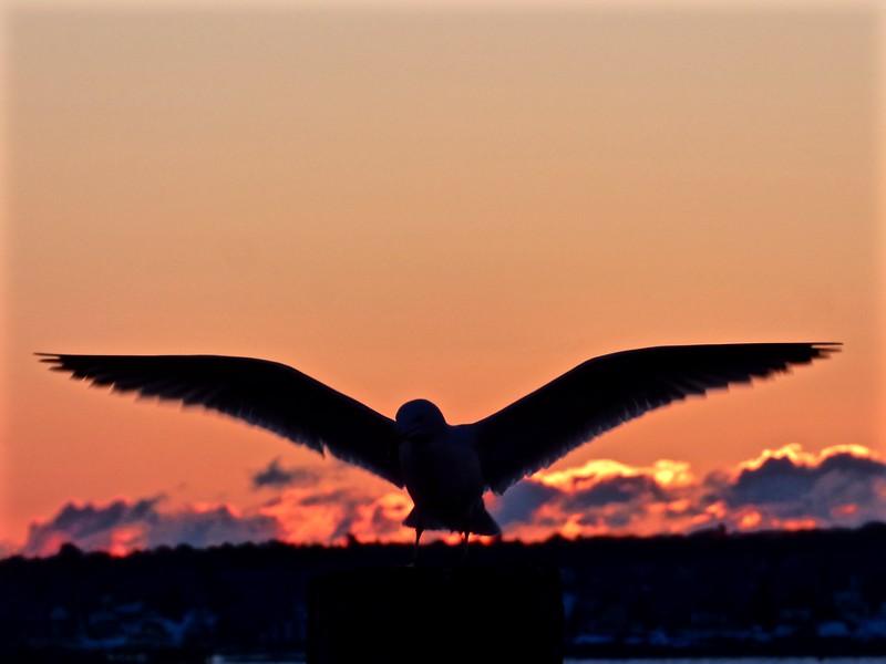 Seagul Rising.jpg