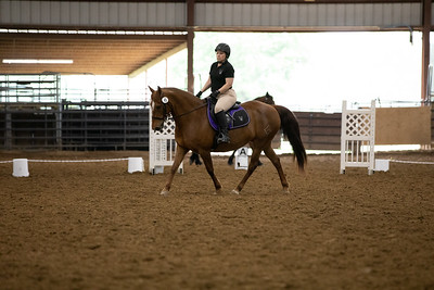 Horse 45