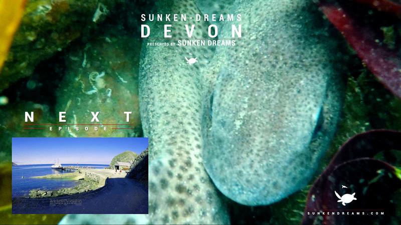 SDSDA Ex31 Devon Episode 2 - North Hallsands - Underwater Naturalist