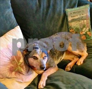 truck-stolen-with-dog-inside-elderly-owner-heartbroken