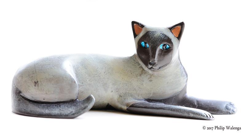 20170217 Cat Model-8760.jpg