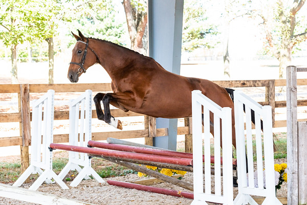 Horse 7- Elissa Gibbs