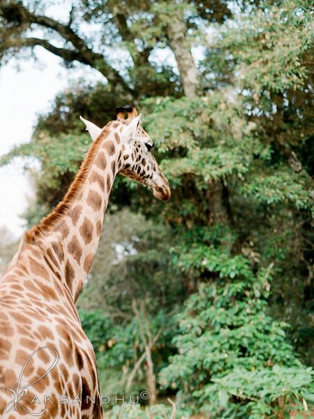 Safari-Africans-152.jpg