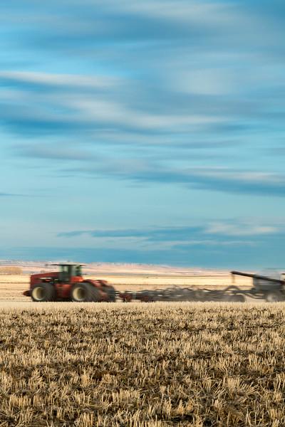 barley 8.jpg