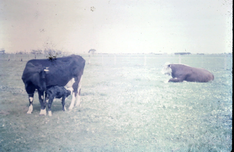 1965-10-4 (17).JPG