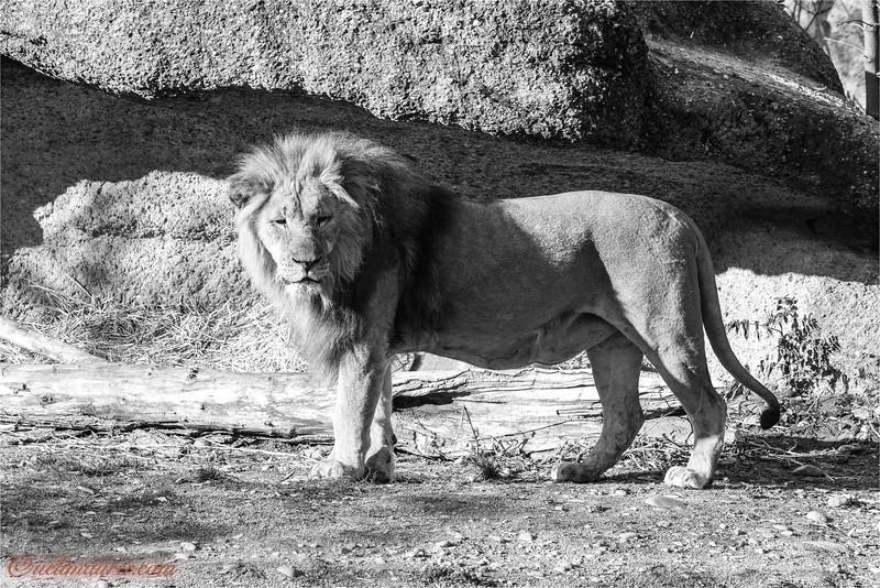 2017-11-16 Zoo Basel - 0U5A8768-Bearbeitet.jpg