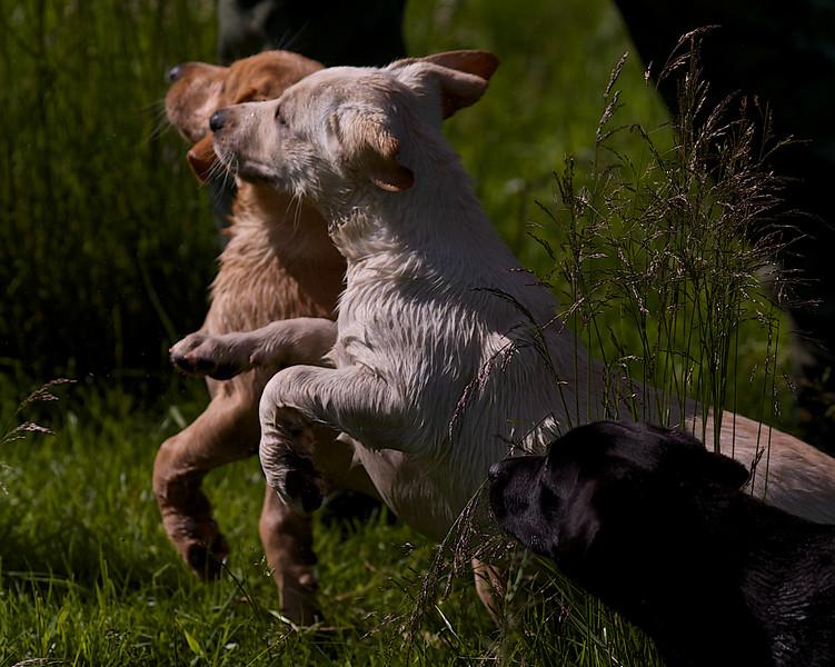 Puppies 797.jpg