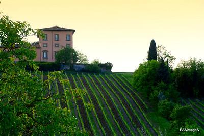 Saraceni Winery & Dinner