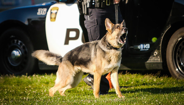 Broadview Heights Police K9