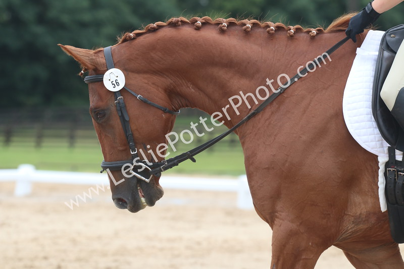 Introductory Level Dressage