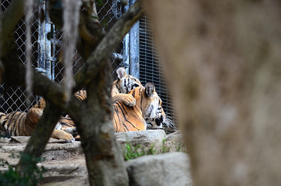 San Diego Zoo - Aug 20, 2011