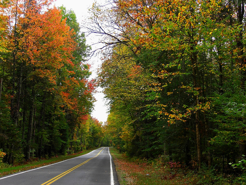 Forest Home Rd - straight  thru an archway of maples