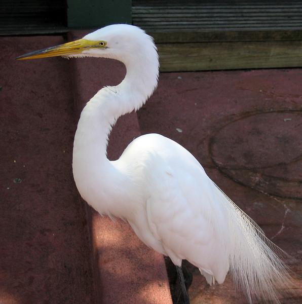 Egret   (Apr 22, 2005, 11:37am)