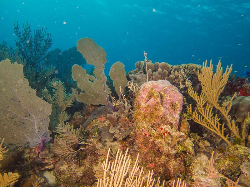 Tulum Trip - Diving 20130405-18-00 _405265104.jpg