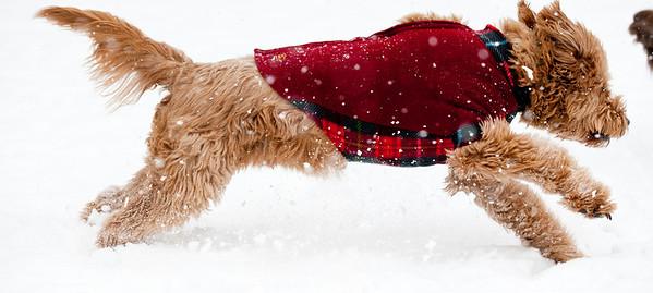 Kramer and Chip Winter Snowstorm