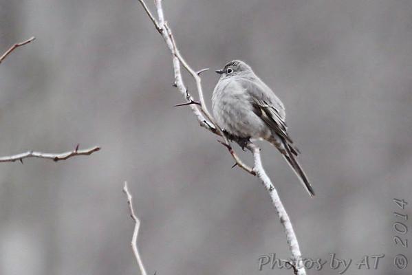 Birding 2014 February
