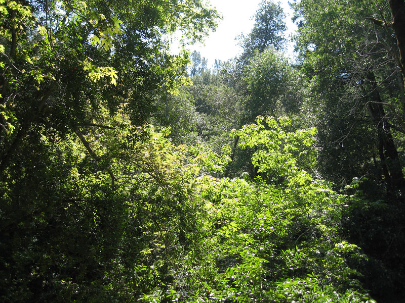 Uvas County Park  200608.JPG