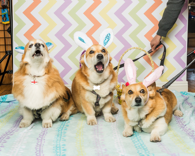 Easter photos at WAG!