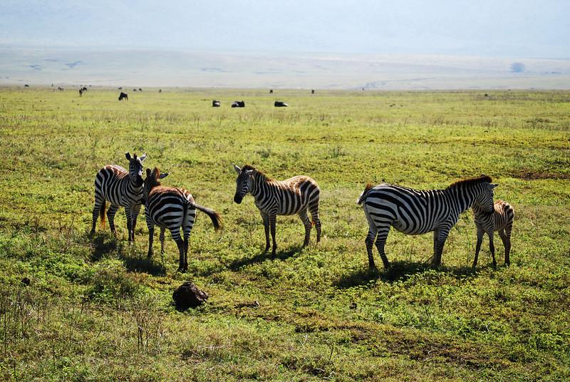 Ngorongoro (50).JPG