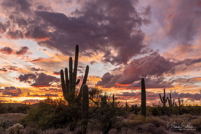 Sabino Sunset 11-5-2019a-.jpg