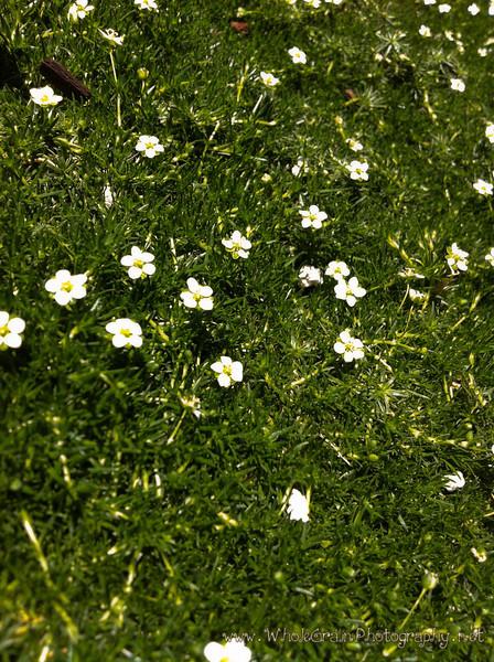 20120529_Garden_1003.jpg
