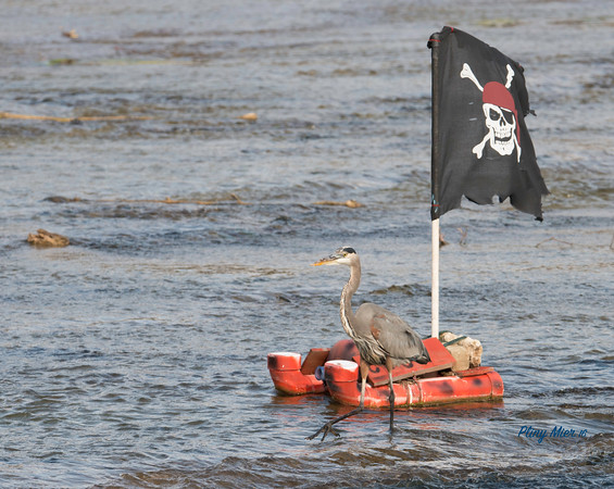 GBH Pirate_DWL6825.jpg