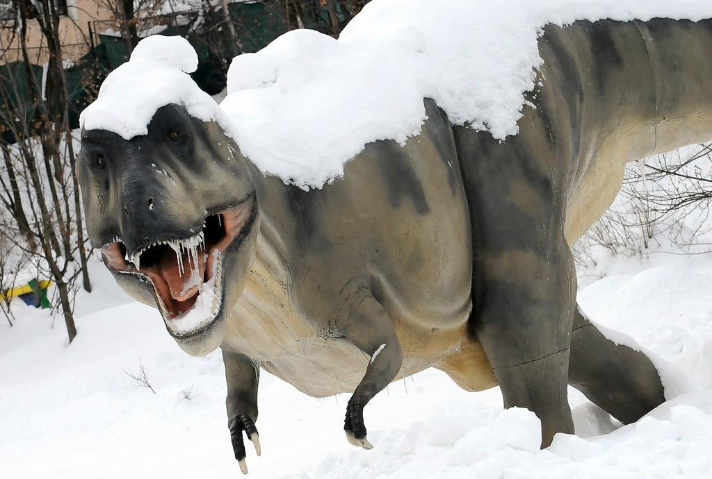 . A life-size figure of a Tyranosaurus Rex is pictured at Sarajevo Zoo on February 8, 2012. Helicopters ferried food and medicine to iced-in villagers on Wednesday as Europe\'s 12-day-old cold snap tightened its frigid grip on the continent, where more than 400 have died as a direct result.  AFP PHOTO / ELVIS BARUKCIC (Photo credit should read ELVIS BARUKCIC/AFP/Getty Images)