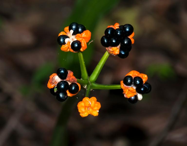 Amazon_Flora-1.jpg